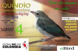 Global Big Day Quindio