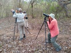 birding aviturismo en los tananeos