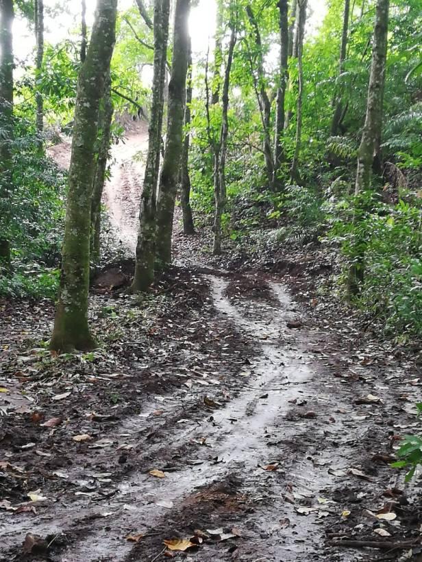 Camino abierto con buldocer en el bosque