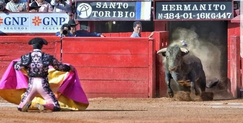 Salida al ruedo de un toro