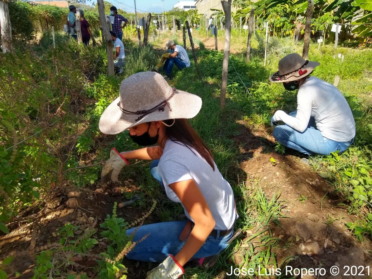 Personas voluntarias trabajando en una huerta