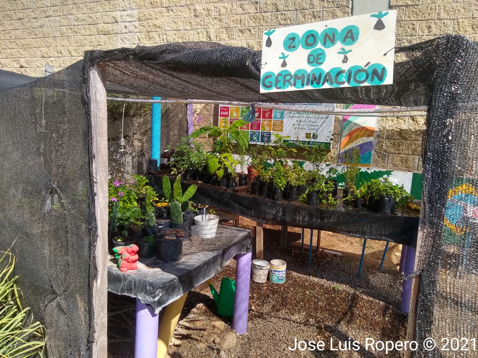 Zona de germinacion de verduras del huerto
