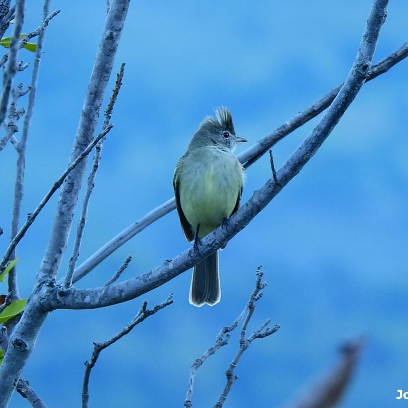 Pajaro sobre la rama de un arbol al amanecer