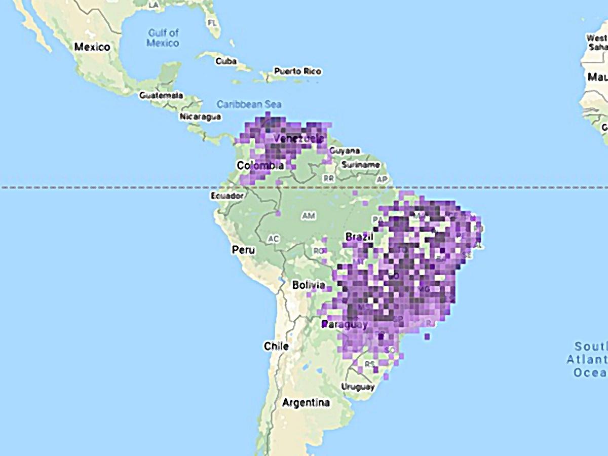 Mapa de la distribucion de la paloma en suramerica